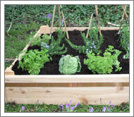 Traditional timber raised beds are attractive