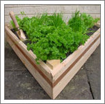 Raised beds are attractive and proctical